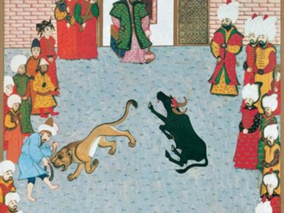 ALC 003 / Ali ÇELEBİ / II. Beyazid Huzurunda Tunus Sultanının Hediye Ettiği Bir Aslan ile Su Sığırının Mücadelesi ve II. Beyazid'in Su Sığırını Öldürmesi