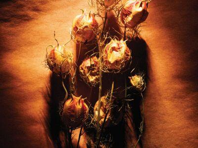 ART 175 / Anonim / Kuru Çiçekler