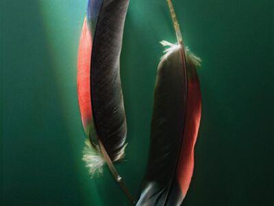 ART 237 / Anonim / Kuş Tüyleri