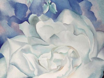 KGE 003 / Georgıa O'Keeffe / White Rose With Larkspur